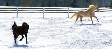 horses_running2
