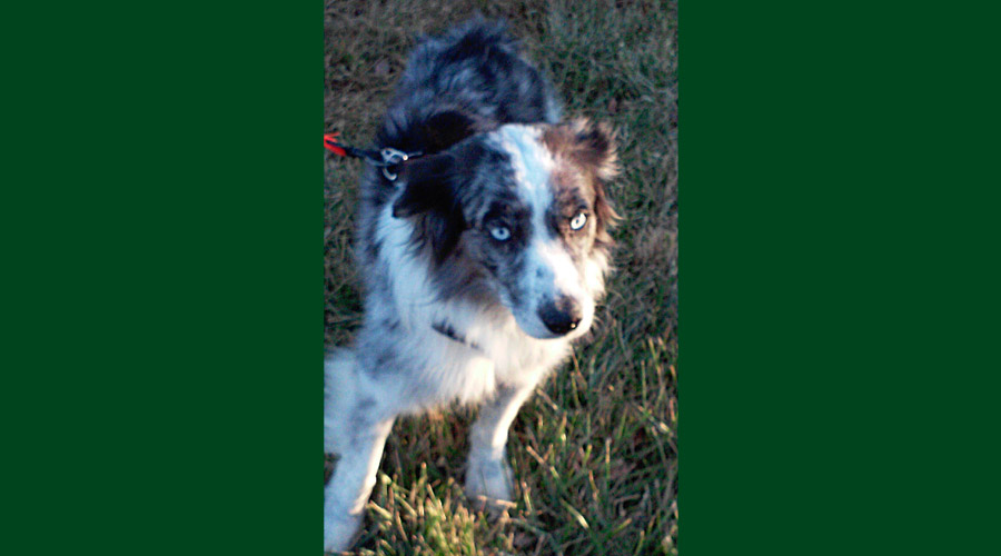 2014_dogs23