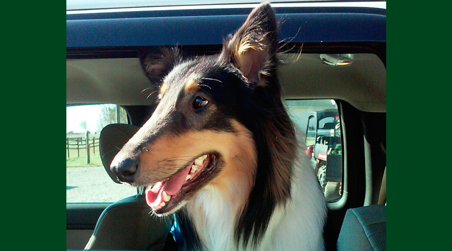 2014_dogs28
