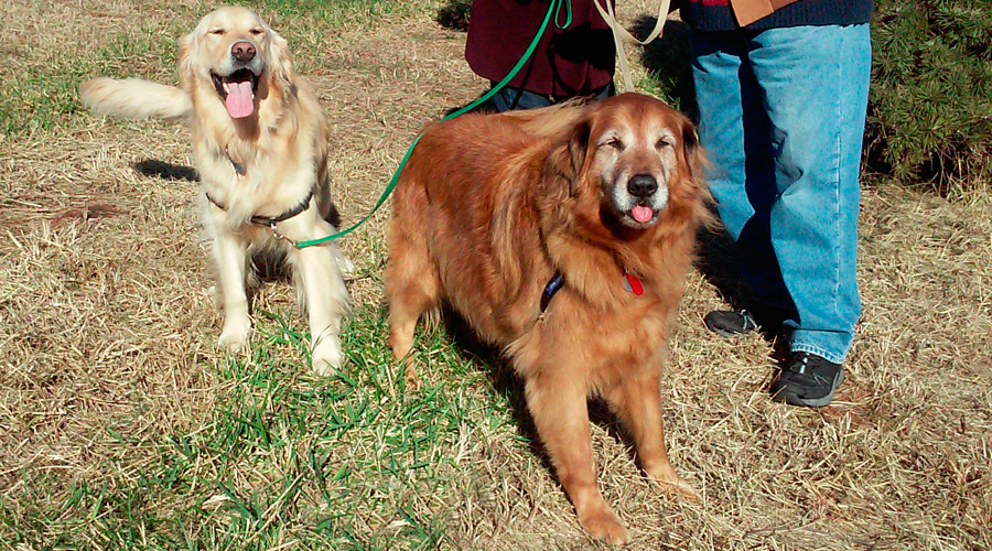 2015_dogs_11_16_8